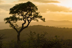 Südafrikanischer Safarisonnenuntergang lizenzfreie stockbilder