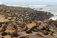 Südafrikanischer Seebären Lizenzfreie Stockfotografie