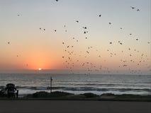 Südafrikanischer Sonnenaufgang lizenzfreies stockfoto