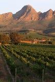 Südafrikanischer Weinbauernhof Stockfoto