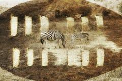 Südafrikanisches Safaridigitalbild mit Zulu Shield und einem Zebra Stockfoto