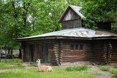 Südamerikanisches Lama u. x28; guanaco& x29; lizenzfreie stockfotografie
