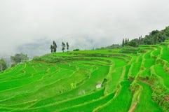 Südchina, Yunnan - 2011: Reisterrassen Lizenzfreie Stockbilder