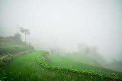 Südchina, Yunnan - 2011: Reisterrassen Stockfotografie