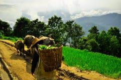 Südchina, Yunnan - 2011: Reisterrassen Stockfoto