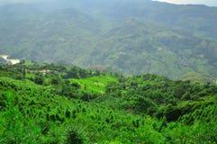 Südchina, Yunnan - 2011: Reisterrassen Lizenzfreie Stockfotografie