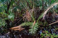 Südflorida Sumpf-Länder Stockfotos