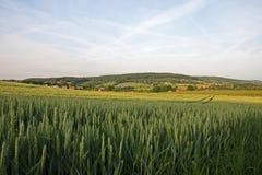 Südholland-Landschaft Stockfotografie