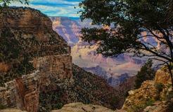 Südkante von Grand Canyon -Ansicht schauend unten gestaltet durch das Überhängen des Baums lizenzfreies stockbild