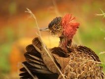 Südliche afrikanische Vögel Lizenzfreie Stockfotos