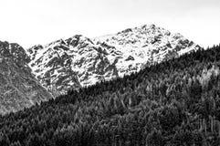 Südliche Alpen gegen Kiefernplantage Lizenzfreie Stockfotografie