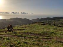 Südliche Felder von Spanien stockfotografie