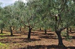 Südliche italienische Landschaft Landschaft Region von Basilikata Lizenzfreies Stockbild
