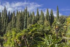 Südliche Pflanzen Stockbild