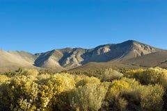 Südliche Sierra stockfotos