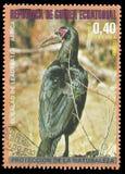 Südlicher Grundhornbill stockbilder