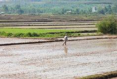 Südost-Vietnam, vietnamesischer Junge, der Reis sät Stockbilder