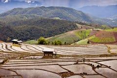 Südostasiatische Reisfeldterrassen in Thailand Lizenzfreies Stockbild