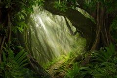 Südostasiatischer tiefer Dschungel stockfoto