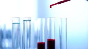 Sądowy naukowiec egzamininuje próbkę krwi, laborancki eksperyment, opieka zdrowotna fotografia stock
