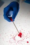 Sądowy technik bierze DNA próbkę od krwionośnej plamy Fotografia Royalty Free