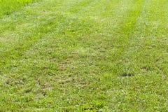 sąsiek trawy gazon fotografia stock