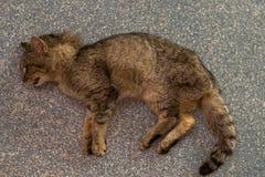 Słaby sedated kot przy weterynaryjną kliniką fotografia stock