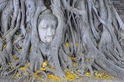 Sławna Buddha głowa w korzeniach drzewo w Ayutthaya Zdjęcia Stock