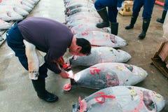 Sławna tuńczyk aukcja przy Tsukiji rybim rynkiem Fotografia Stock