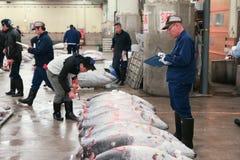 Sławna tuńczyk aukcja przy Tsukiji rybim rynkiem Zdjęcia Stock