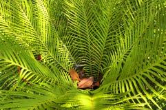 Sławni Tropikalni ogródy botaniczni w Funchal Obraz Stock