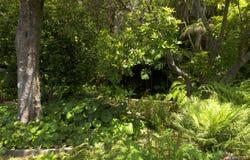 Sławni Tropikalni ogródy botaniczni w Funchal Zdjęcia Stock