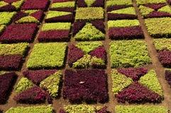 Sławni Tropikalni ogródy botaniczni w Funchal Zdjęcie Royalty Free