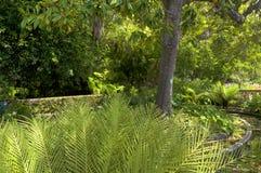 Sławni Tropikalni ogródy botaniczni w Funchal Obrazy Royalty Free