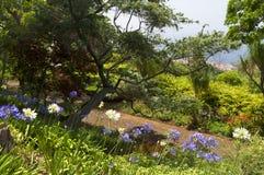 Sławni Tropikalni ogródy botaniczni w Funchal Fotografia Royalty Free
