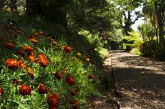 Sławni Tropikalni ogródy botaniczni w Funchal Fotografia Stock