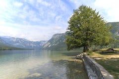 Sławny drzewo na jeziornym Bohinj, sławny miejsce przeznaczenia nie daleko od jeziora Krwawiącego Obrazy Stock