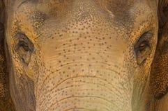 słoń Zdjęcia Royalty Free