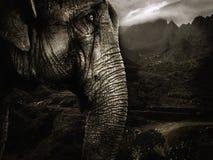 słoń Zdjęcie Stock