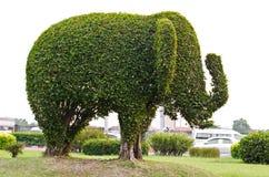Słoń. Obraz Royalty Free
