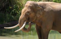 Słoń zdjęcia stock