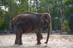 Słoń obrazy stock