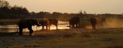 słoń afrykański rodziny Obraz Royalty Free