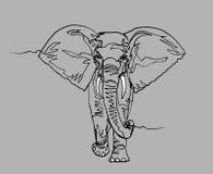 Słoń Afryka, ciągła linia royalty ilustracja
