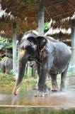 Słoń bierze kąpać Obraz Royalty Free