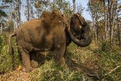 Słoń dostaje brudnym Obrazy Royalty Free