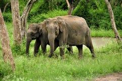 słoń dziki obraz royalty free