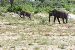 Słoń i cald krzyżuje suchego riverbed w parku zdjęcie stock