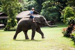 Słoń i jeździec Obraz Stock