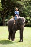 Słoń i jeździec Zdjęcia Stock